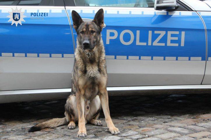 dank Polizeihund Didier wurde ein Autoknacker erwischt. Foto: Polizei Hamburg