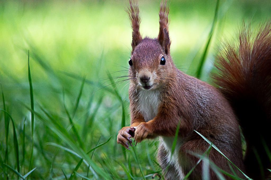 Harter Winter für Eichhörnchen: Zufüttern empfohlen