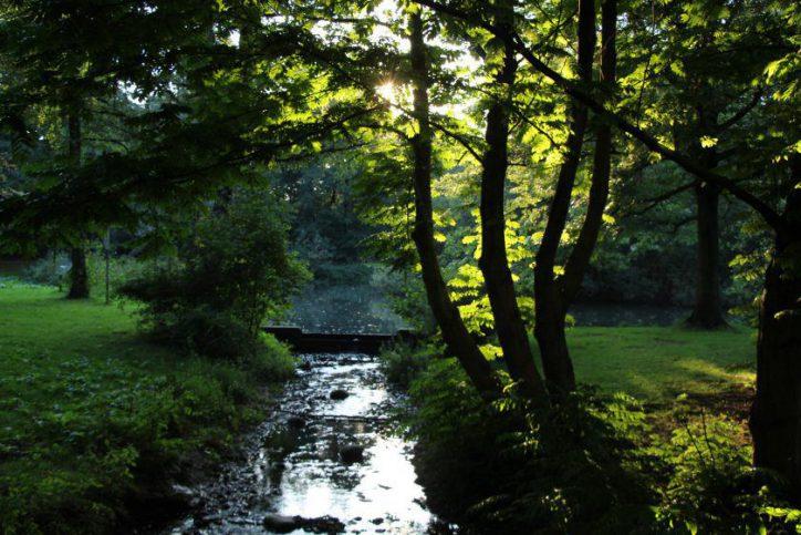 Baumfällungen an Eimsbütteler Gewässern