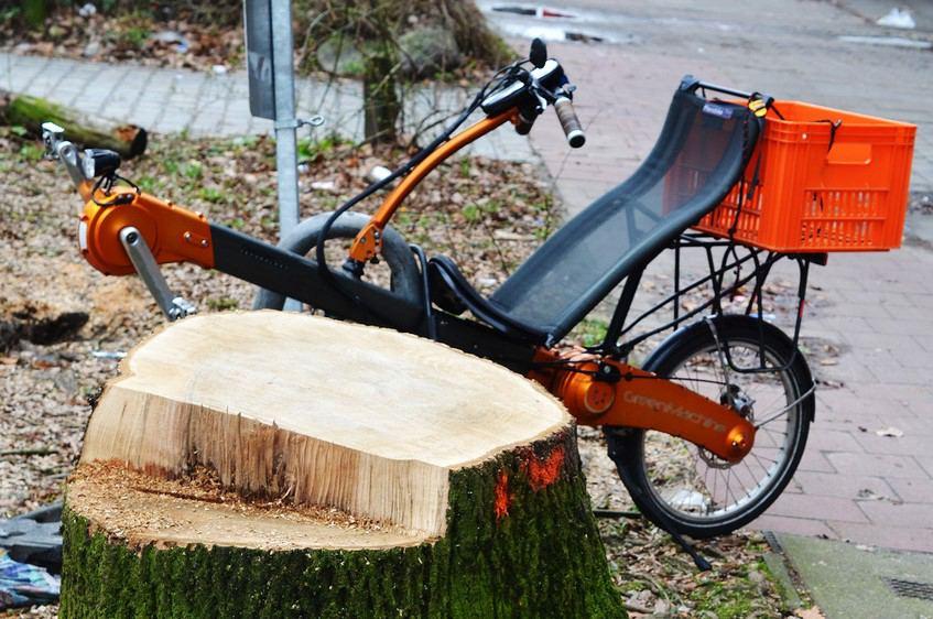 Der NABU hat die Baumfällsaison 2018/19 ausgewertet. Foto: Aart van Bezooijen