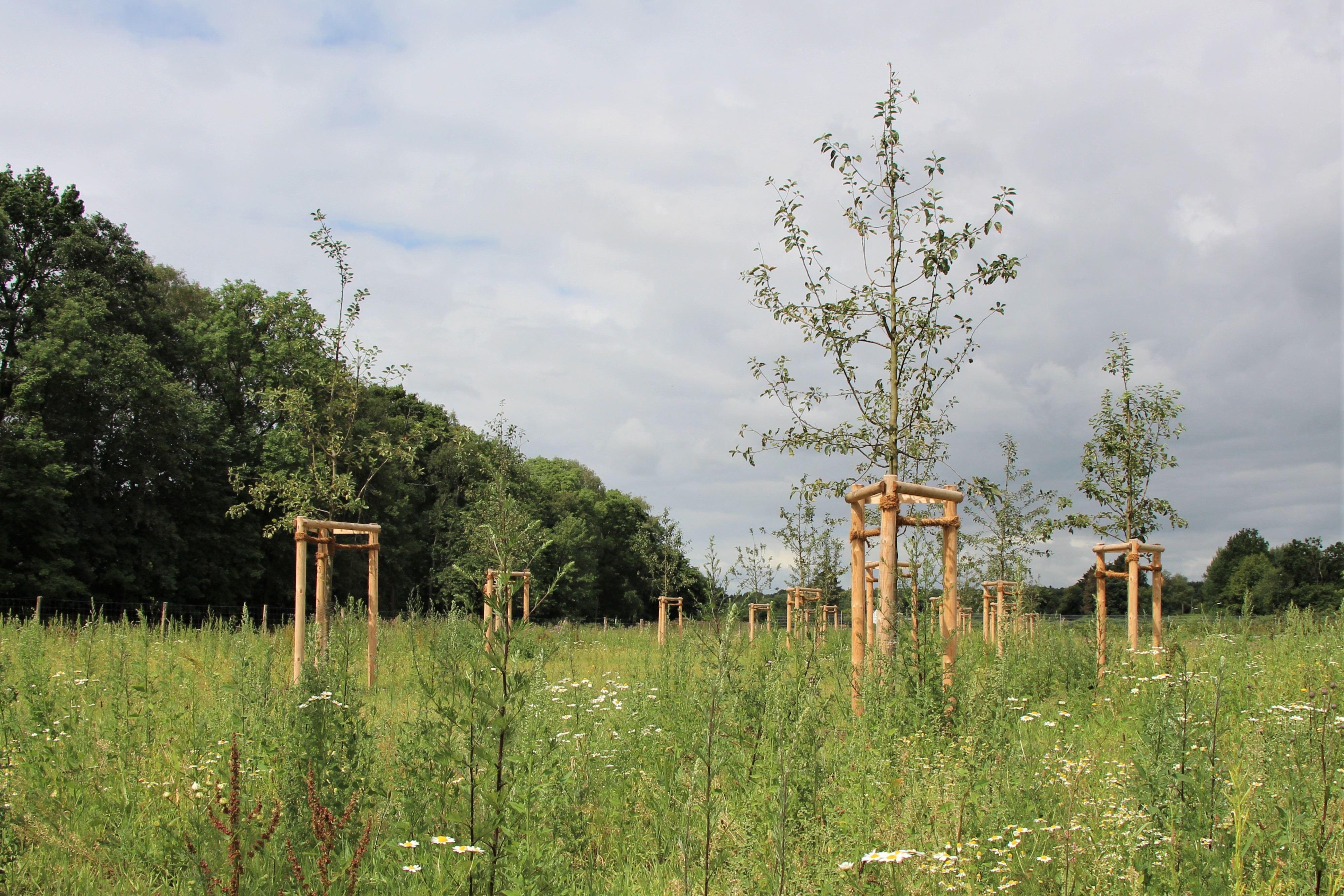 Die neue Grünanlage ist eine Kombination aus Kleingärten und naturschutzrechtlichen Ausgleichflächen. Foto: Sahra Vittinghoff