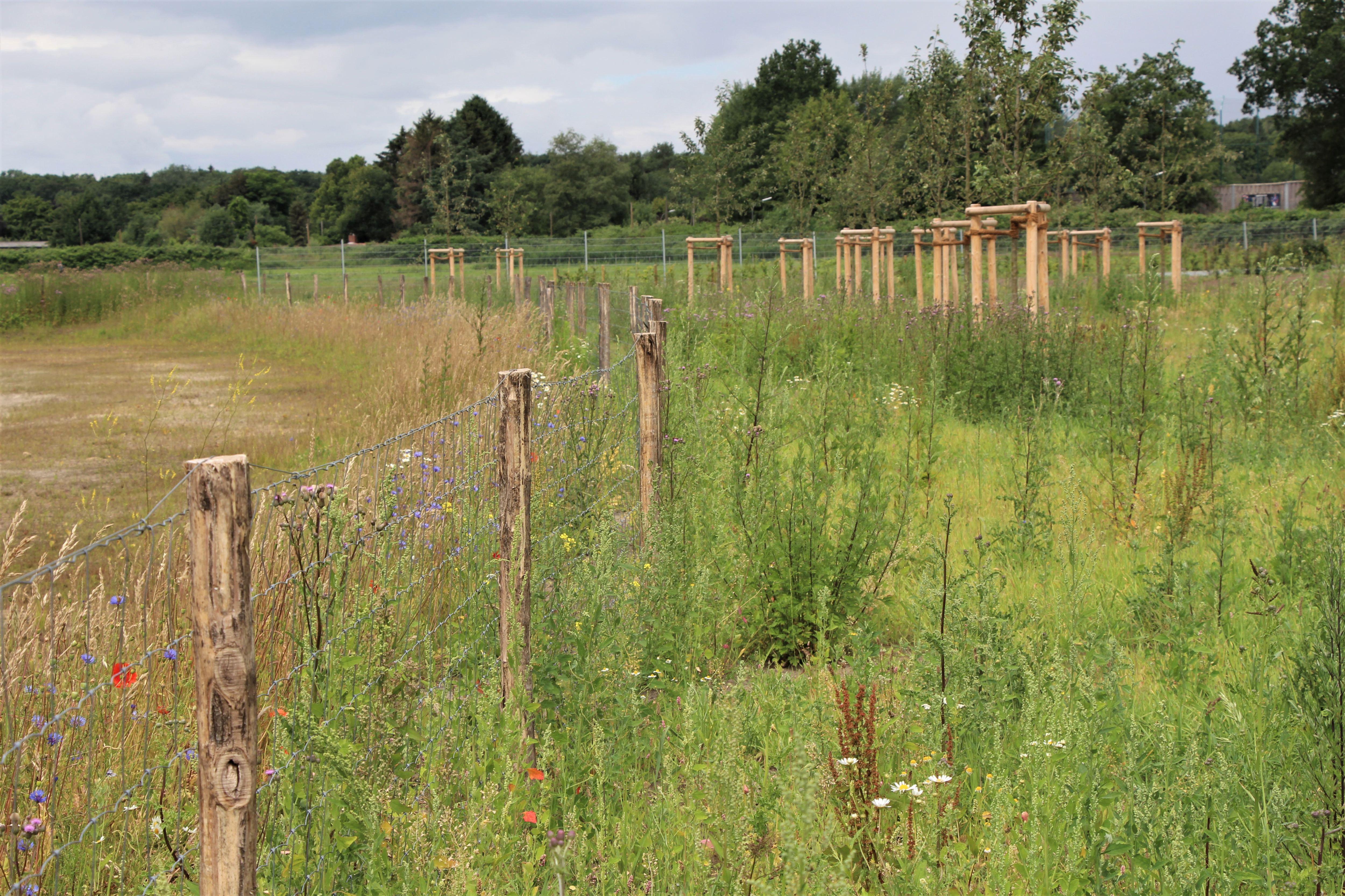 Die Langgraswiese soll nur zweimal im Jahr gemäht werden, um die Artenvielfalt zu schützen. Foto: Sahra Vittinghoff