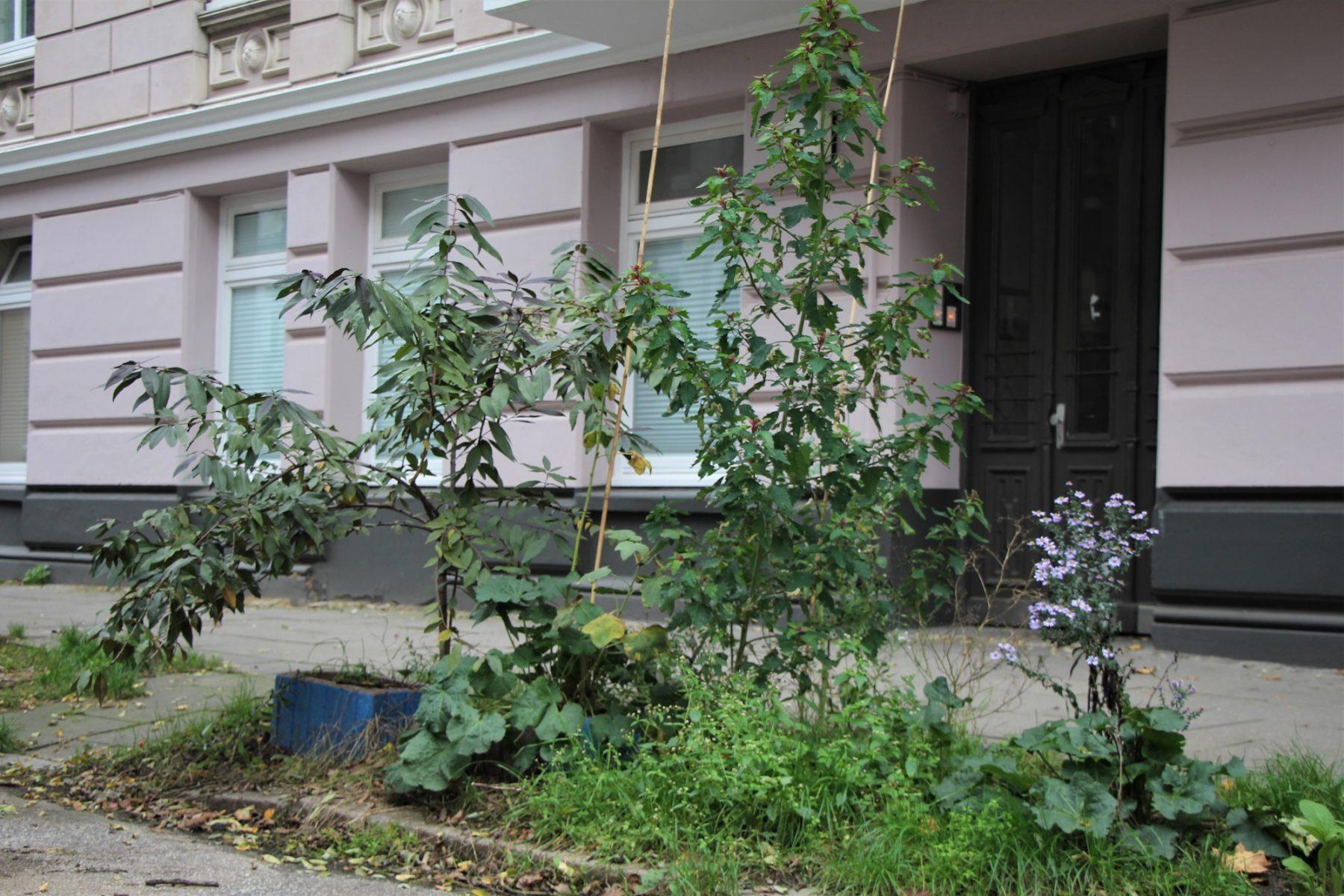 Das Bezirksamt hält die Pflanzkübel für Stolperfallen. Die Pflanzen sollen weg. Foto: Catharina Rudschies