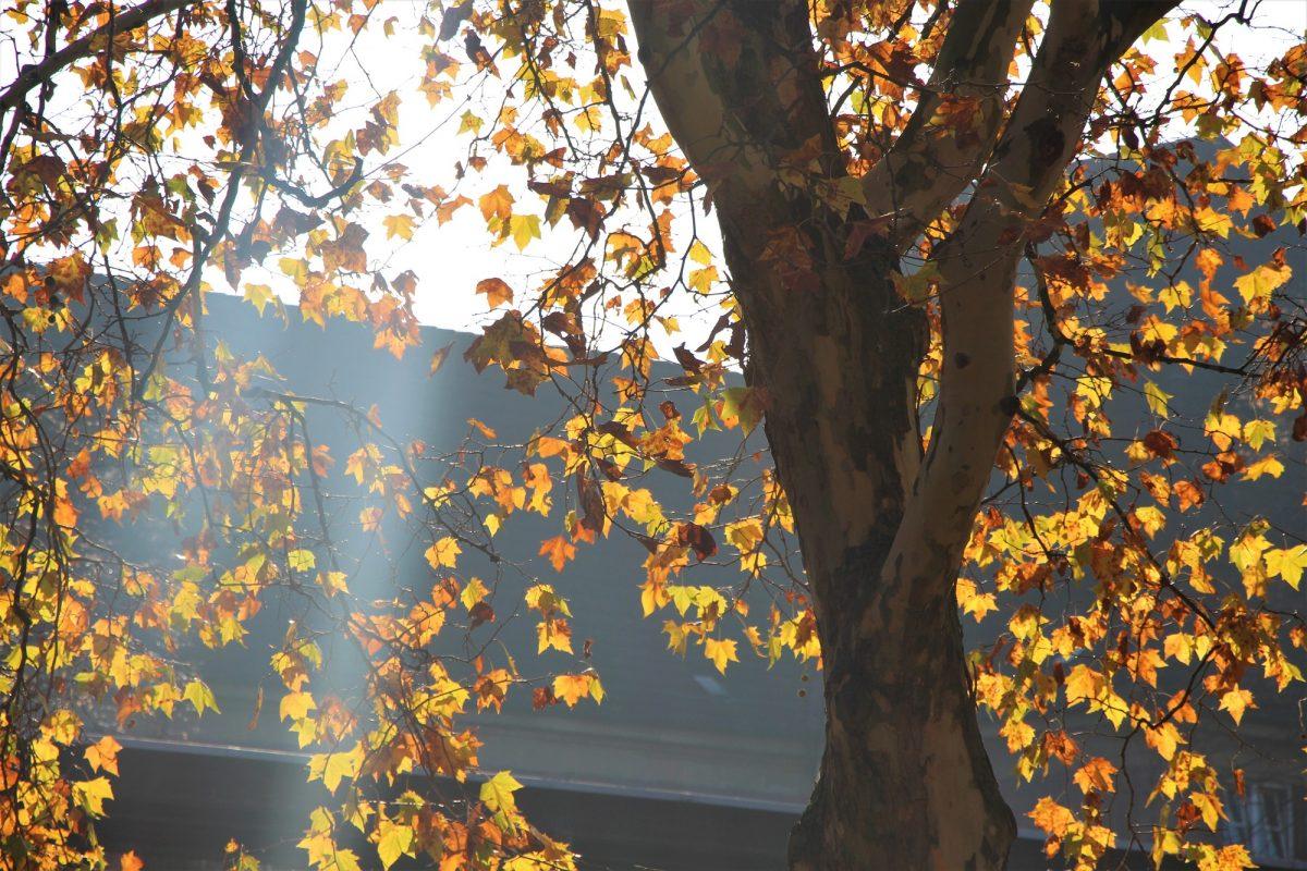 72 Bäume sind im Bezirk Eimsbüttel von Fällungen betroffen. Foto: Alicia Wischhusen