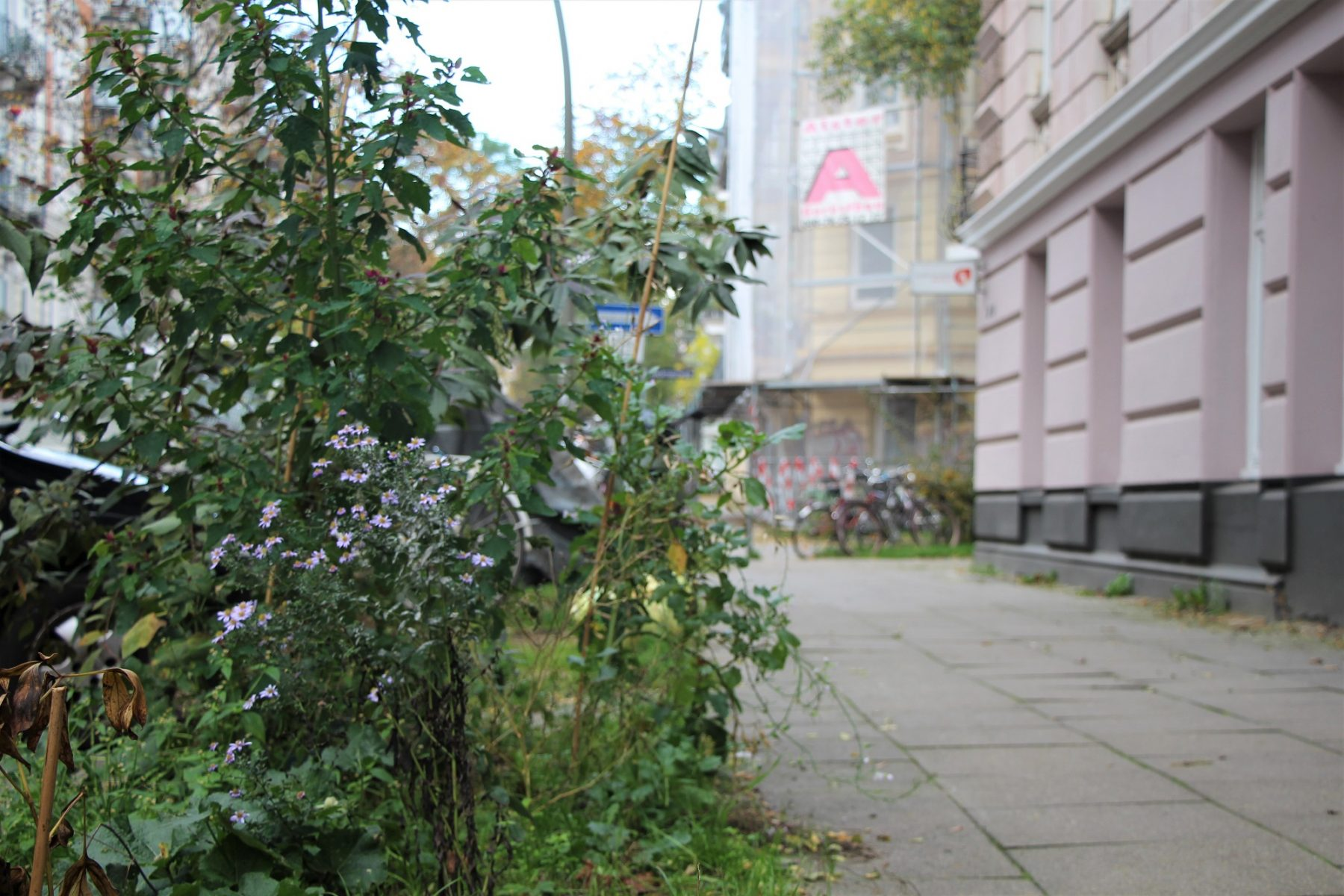 Von Stefan Ideler gepflanztes Grün in der Rellinger Straße. Foto: Catharina Rudschies