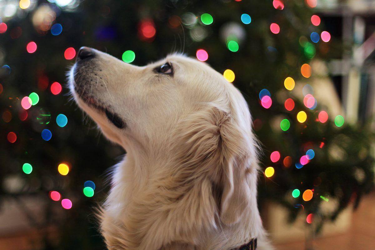 Tierheime sind gegen Tiere als Weihnachtsgeschenke. Foto: Symbolbild