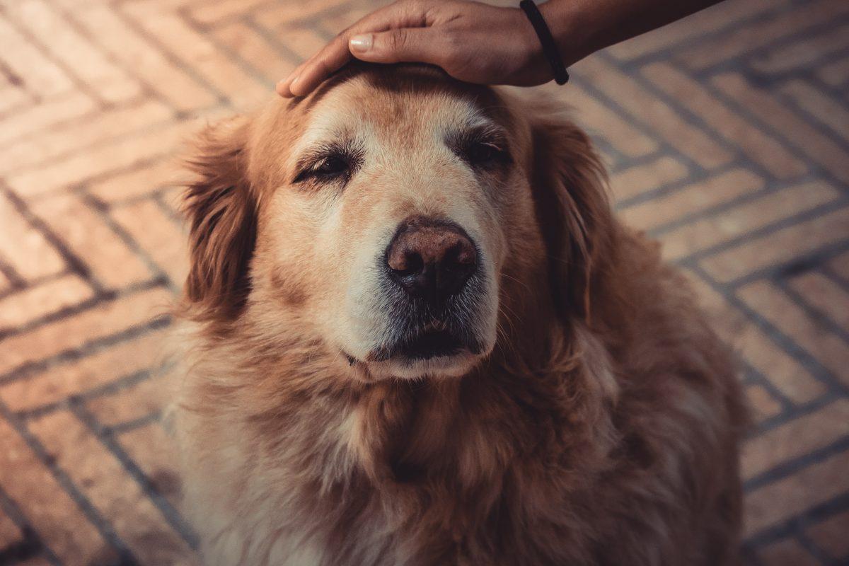 Für Haustiere ist Silvester stressig. Foto: Symbolbild