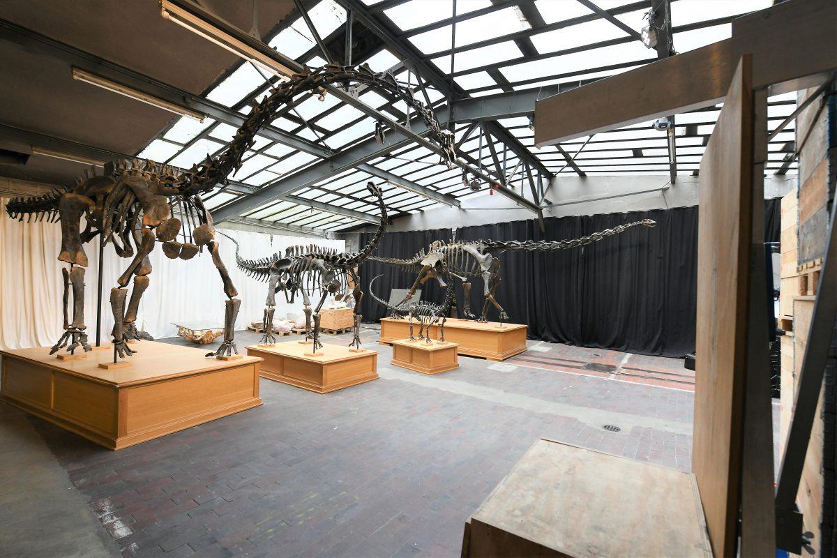 Der Stiftung Hagenbeck ist es gelungen, vier Skelette von Dinosauriern zu sichern. Foto: Michael Zapf