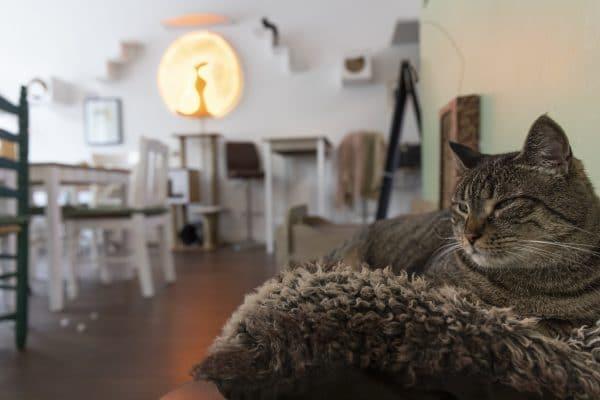 Die Katzen langweilen sich, wenn die Spielpartner ausbleiben. Foto: Linus Eckel