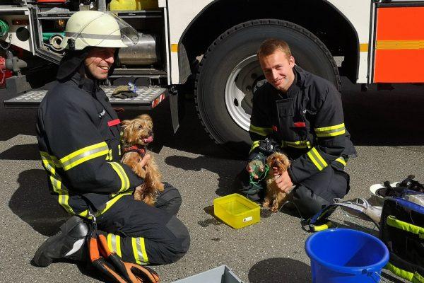 03.08.2020 Am Nachmittag rettete die Feuerwehr zwei Hunde aus einer verqualmten Wohnung in der Kollaustraße 113. Foto: Christoph Seemann