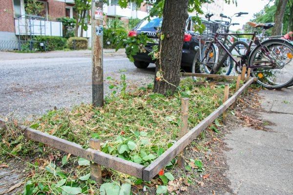 Das zerstörte Beet in der Eimsbütteler Straße. Foto: Alana Tongers