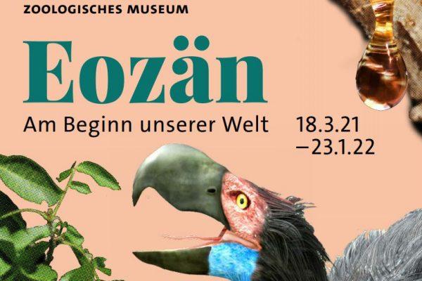 Eozän Zoologisches Museum