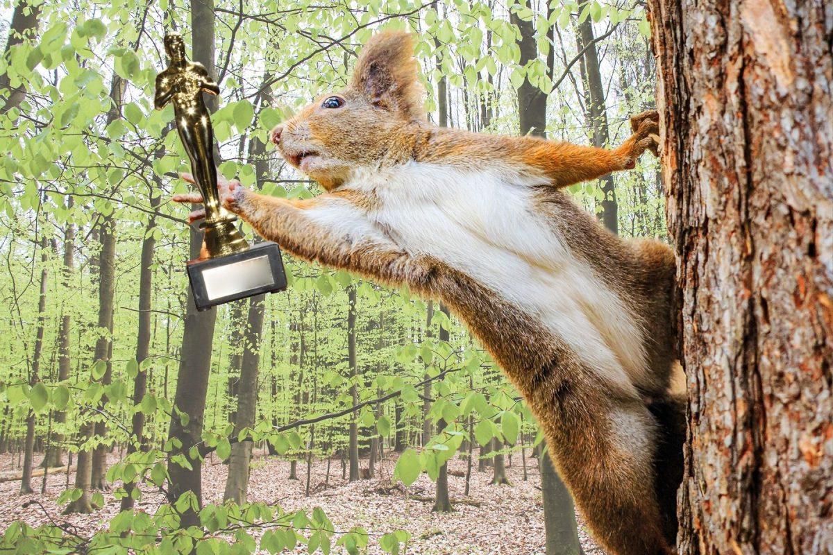 Eichhörnchen: Eimsbush Squirrel TV